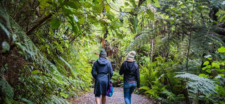 Sanctuary Mountain Maungatautari Walking Trails, Waikato, New Zealand